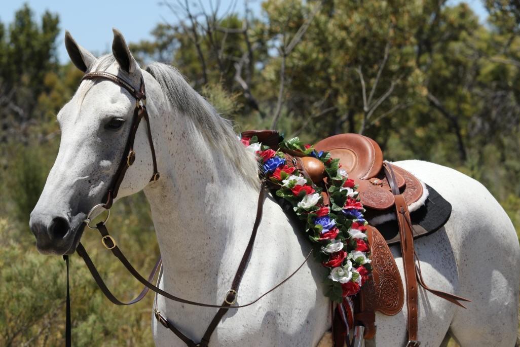 wade western saddle roping saddle padded seat
